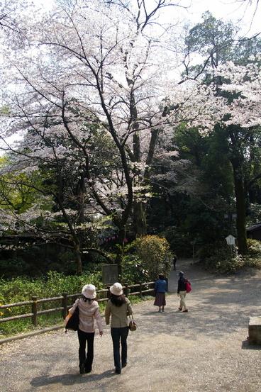 20090408kawagoe_sakura_031